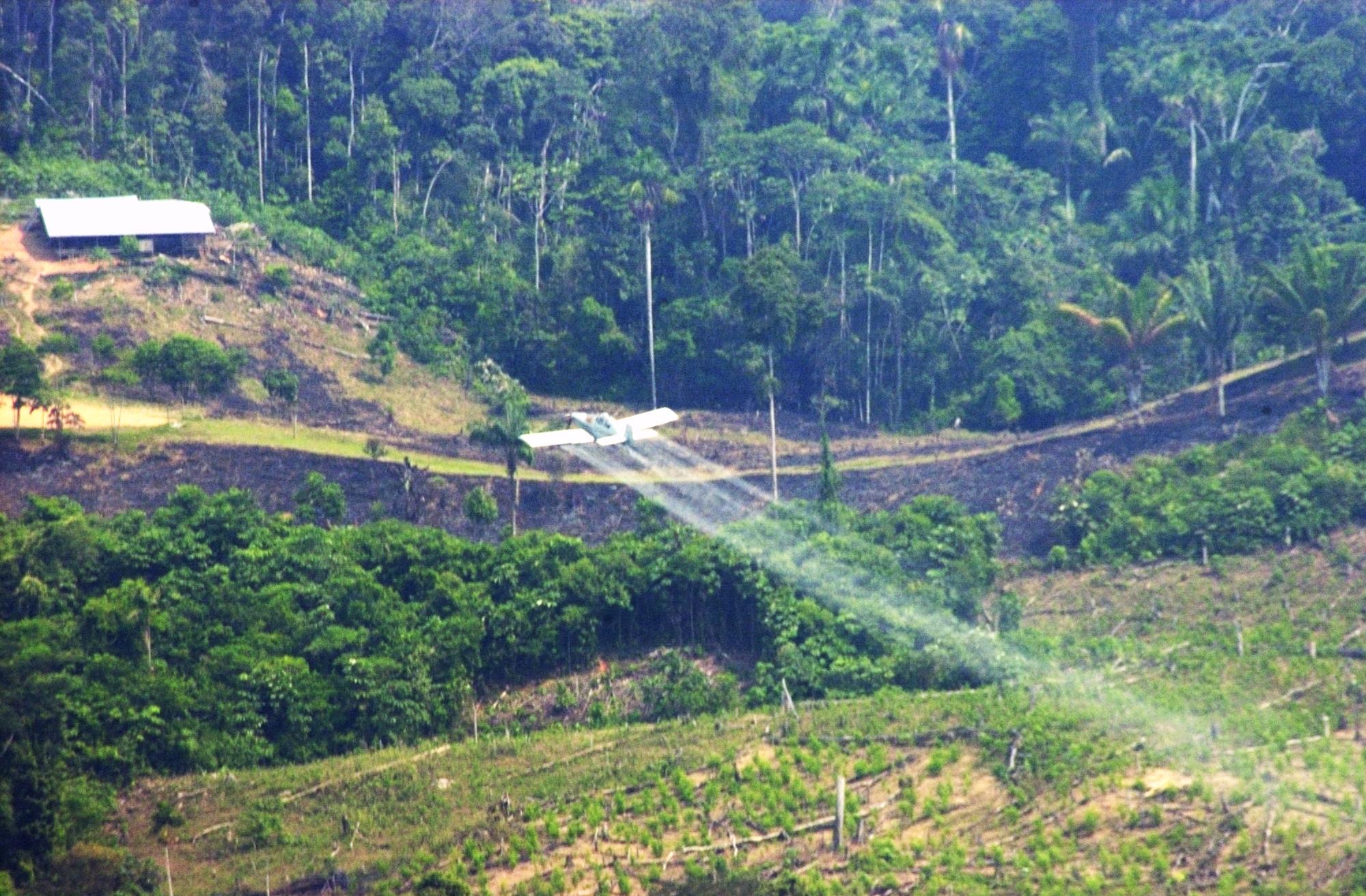 Por qué Colombia no debe reanudar la fumigación aérea con glifosato ...
