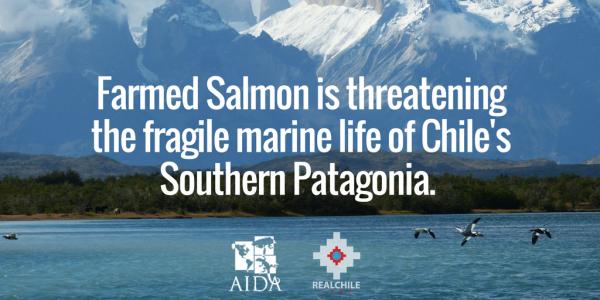 Meme about Salmon