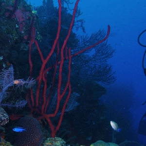 Coral reefs in Cozumel, Mexico.