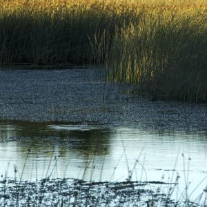 The Montreaux Record: Saving Essential Wetlands