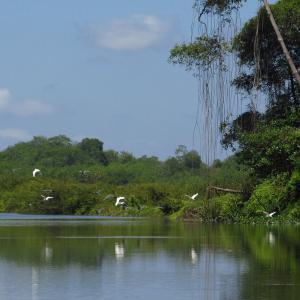 Declaración de cierre de las ONG a la COP12 de Ramsar