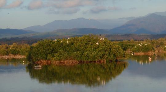 A view of mangrove tucked between the blue cloudy sky and blue river waters.
