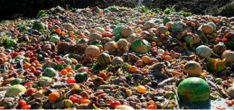 Photo: A sea of food thrown in the trash. Source: www.ecotumismo.org