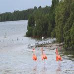Diversidad de especies de aves en Yum Balam, aréa natural protegida en México