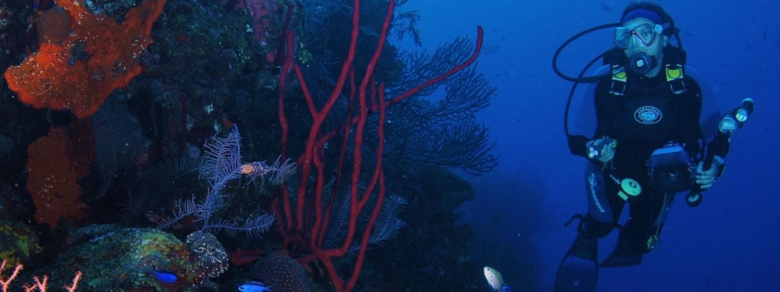 Arrecifes de coral en Cozumel, México.