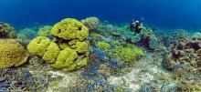 Coral reefs in Vanuatu