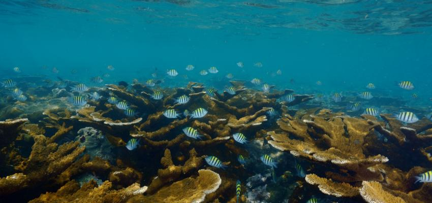 Coral ecosystem in the Gulf of Mexico. | Credit: Manuel Victoria.