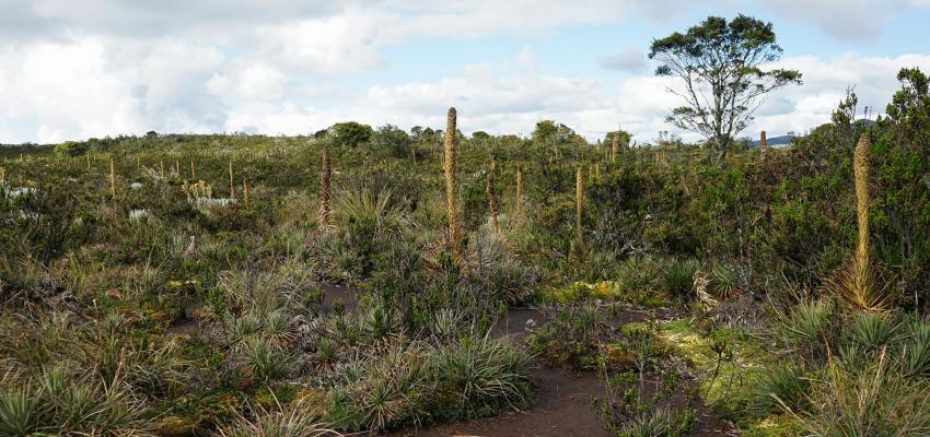 Suelos andisoles importancia y amenazas for Importancia de los suelos