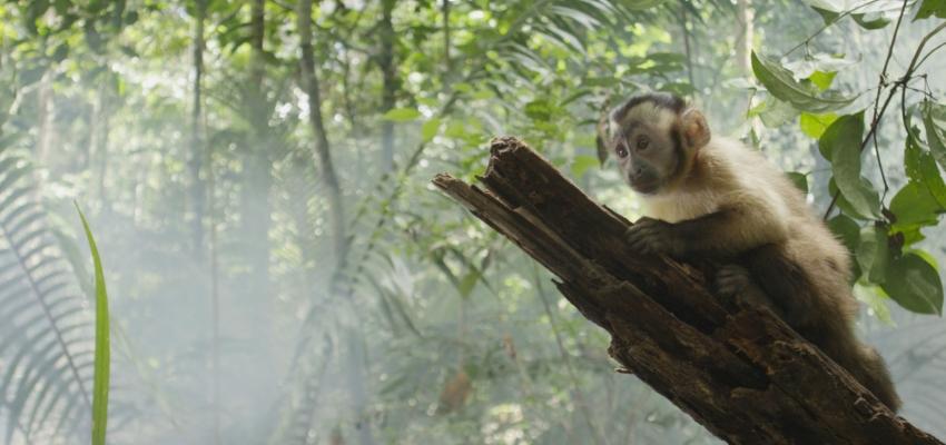 Amazonía, Brasil