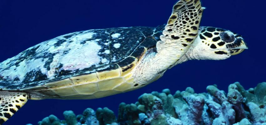 Progress on Protecting the Loggerhead Turtle!