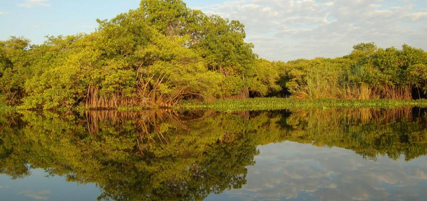 AIDA Calls for the Effective Protection of Wetlands in the Americas