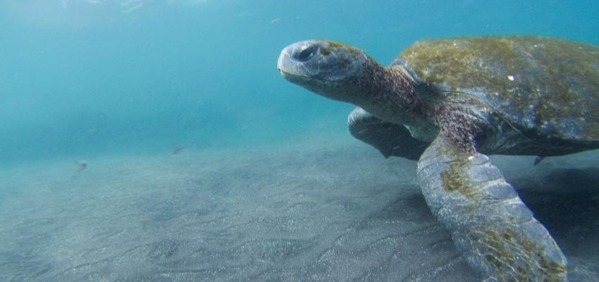 Strengthening the Sea Turtle Treaty