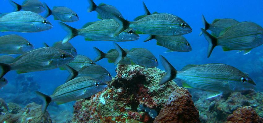 Arrecifes de Veracruz, México